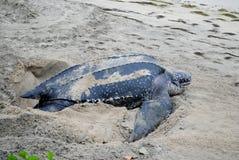 Λαγούτο Tortoise Στοκ φωτογραφία με δικαίωμα ελεύθερης χρήσης