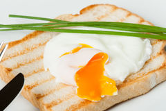 Λαθραίο αυγό στη φρυγανιά με τα φρέσκα κρεμμύδια λευκό πιάτων Στοκ φωτογραφίες με δικαίωμα ελεύθερης χρήσης