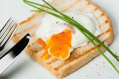 Λαθραίο αυγό στη φρυγανιά με τα φρέσκα κρεμμύδια και τα καρυκεύματα λευκό πιάτων Στοκ εικόνα με δικαίωμα ελεύθερης χρήσης