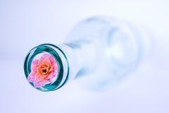 λαιμός μπουκαλιών Στοκ εικόνες με δικαίωμα ελεύθερης χρήσης