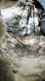 Λακκούβα με τις αντανακλάσεις δέντρων το χειμώνα Στοκ φωτογραφίες με δικαίωμα ελεύθερης χρήσης