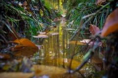 Λακκούβα στο δάσος στοκ εικόνες