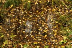 Λακκούβα στο δασικό έλος φθινοπώρου στοκ εικόνες με δικαίωμα ελεύθερης χρήσης