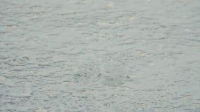 Λακκούβα στο πεζοδρόμιο στη βροχή Η πτώση πτώσεων στο νερό και αποκλίνει κύκλοι Παρέμβαση των κυμάτων Βροχή Απριλίου Η πρώτη SP απόθεμα βίντεο