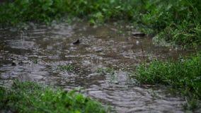 Λακκούβες στη χλόη στην κινηματογράφηση σε πρώτο πλάνο βροχής φιλμ μικρού μήκους