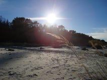 Λαμπιρίζοντας ξηρά χλόη στο ηλιοβασίλεμα Άσπροι ήλιος και μπλε ουρανός στοκ εικόνα με δικαίωμα ελεύθερης χρήσης