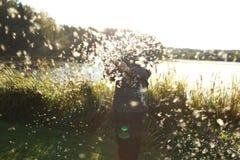Λαμπρά νερό και bulrush Στοκ Φωτογραφία