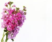 λαμπρά χρωματισμένα λουλ&om Στοκ Εικόνες