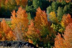Λαμπρά χρώματα πτώσης στη μέση του βράχου λάβας στοκ εικόνα