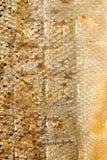 Λαμπρά ψάρια σολομών κλιμάκων κινηματογραφήσεων σε πρώτο πλάνο ως ζωική σύσταση υποβάθρου τροφίμων Στοκ Φωτογραφίες