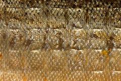 Λαμπρά ψάρια σολομών κλιμάκων κινηματογραφήσεων σε πρώτο πλάνο ως ζωική σύσταση υποβάθρου τροφίμων Στοκ Εικόνες