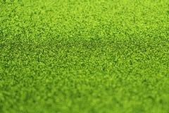 Λαμπρή Πράσινη Βίβλος Στοκ Εικόνες