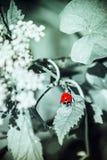 Λαμπρίτσα σε ένα φύλλο Στοκ Εικόνες