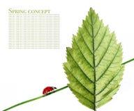 λαμπρίτσα χλωρίδας στοκ εικόνες
