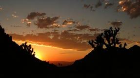 Λαμπρό ηλιοβασίλεμα στο εθνικό πάρκο δέντρων του Joshua Στοκ Εικόνα