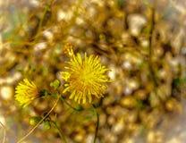 Λαμπρό κίτρινο άγριο λουλούδι στο υπόβαθρο κρεβατιών αμμοχάλικου Στοκ φωτογραφία με δικαίωμα ελεύθερης χρήσης