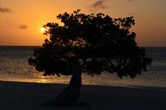 Λαμπρό πορτοκαλί ηλιοβασίλεμα πέρα από ένα δέντρο Divi Divi Στοκ Εικόνες