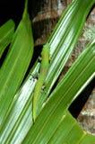 λαμπρό χρωματισμένο gecko Στοκ Φωτογραφίες