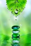 λαμπρό ύδωρ πετρών SPA φύλλων απ& Στοκ Εικόνα