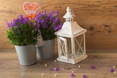 Λαμπτήρας κηροπηγίων και campanula κουδουνιών λουλουδιών Στοκ φωτογραφία με δικαίωμα ελεύθερης χρήσης