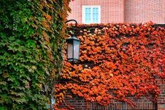Λαμπτήρας οδών φθινοπώρου Στοκ Εικόνες
