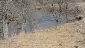 Λασπώδες νερό στον ποταμό στο υπόβαθρο των ξηρών δέντρων χλόης και άνοιξη φιλμ μικρού μήκους
