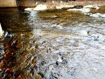 λασπώδες ύδωρ στοκ εικόνες