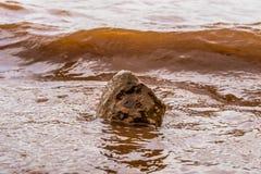 Λασπώδη κύματα νερού που χτυπούν έναν βράχο, Panshet στοκ εικόνες