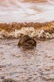 Λασπώδη κύματα νερού που χτυπούν έναν βράχο, Panshet στοκ εικόνα με δικαίωμα ελεύθερης χρήσης