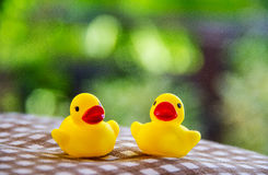 Λαστιχένια παιχνίδια νεοσσών στο πράσινο υπόβαθρο θαμπάδων στοκ φωτογραφία με δικαίωμα ελεύθερης χρήσης