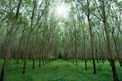 Λαστιχένια φυτεία στο νότο της Ταϊλάνδης στοκ φωτογραφία