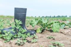 Λαστιχένιες μπότες από τον αγρότη σε έναν ξηρό τομέα στοκ εικόνες