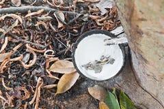 λαστιχένιο δέντρο Στοκ φωτογραφία με δικαίωμα ελεύθερης χρήσης