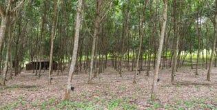 Λαστιχένιο τρύπημα Ταϊλάνδη Στοκ φωτογραφία με δικαίωμα ελεύθερης χρήσης