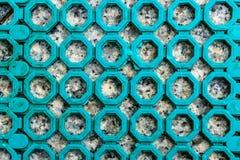 Λαστιχένιο χαλί ολίσθησης Στοκ Εικόνες