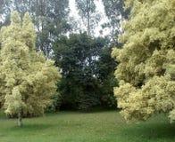Λατινικό δάσος Στοκ εικόνες με δικαίωμα ελεύθερης χρήσης
