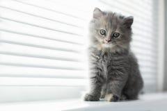 Λατρευτή λίγη γάτα που κοιτάζει μέσω του παραθύρου, κλείνει επάνω το portrai Στοκ Εικόνα