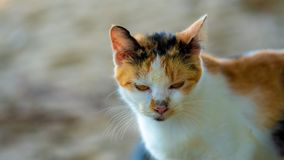 Λατρευτή αδέξια τρελλή γάτα ύπνου στοκ φωτογραφίες