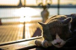 Λατρευτή γάτα που βάζει σε έναν πάγκο με το ηλιοβασίλεμα, Ιστανμπούλ, Τουρκία Στοκ Φωτογραφίες