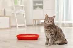 Λατρευτή γκρίζα γάτα κοντά στο κιβώτιο απορριμάτων στο εσωτερικό στοκ φωτογραφίες