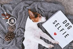Λατρευτοί σκυλί τεριέ του Russell γρύλων και πίνακας διάθεσης Στοκ Φωτογραφίες