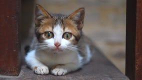 Λατρευτός λίγη άσπρη γάτα που χασμουριέται καθμένος στην ξύλινη σκάλα φιλμ μικρού μήκους