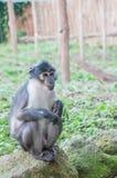 Λατρευτός λίγος πίθηκος στοκ φωτογραφία με δικαίωμα ελεύθερης χρήσης