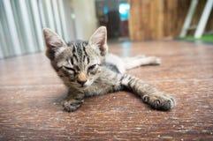 Λατρευτός λίγο τιγρέ γατάκι ακριβώς ξυπνήστε Στοκ Εικόνα