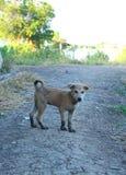 Λατρευτό λίγο σκυλί έπαιξε γύρω και πήρε τα βρώμικα πόδια λάσπης Στοκ φωτογραφία με δικαίωμα ελεύθερης χρήσης