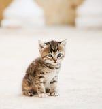 λατρευτό γατάκι μικρό Στοκ φωτογραφία με δικαίωμα ελεύθερης χρήσης