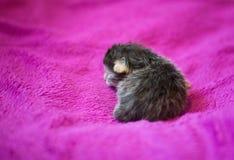 Λατρευτό γατάκι, νεογέννητη έννοια Στοκ φωτογραφία με δικαίωμα ελεύθερης χρήσης