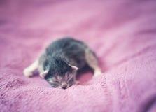 Λατρευτό γατάκι, νεογέννητη έννοια Στοκ Φωτογραφία