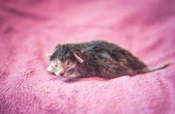 Λατρευτό γατάκι, νεογέννητη έννοια Στοκ Εικόνες