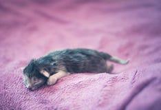 Λατρευτό γατάκι, νεογέννητη έννοια Στοκ εικόνα με δικαίωμα ελεύθερης χρήσης